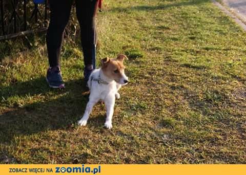 Foxia, łagodna sunieczka szuka kochającego domu!