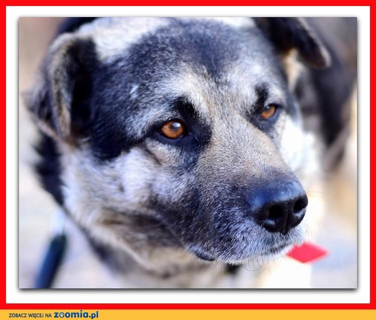 Średni, bardzo grzeczny,łagodny,delikatny,spokojny pies SOLAR_Adopcja