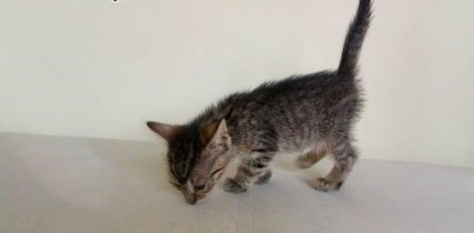 Mała kotka Żelka szuka domu   łódzkie Łódź