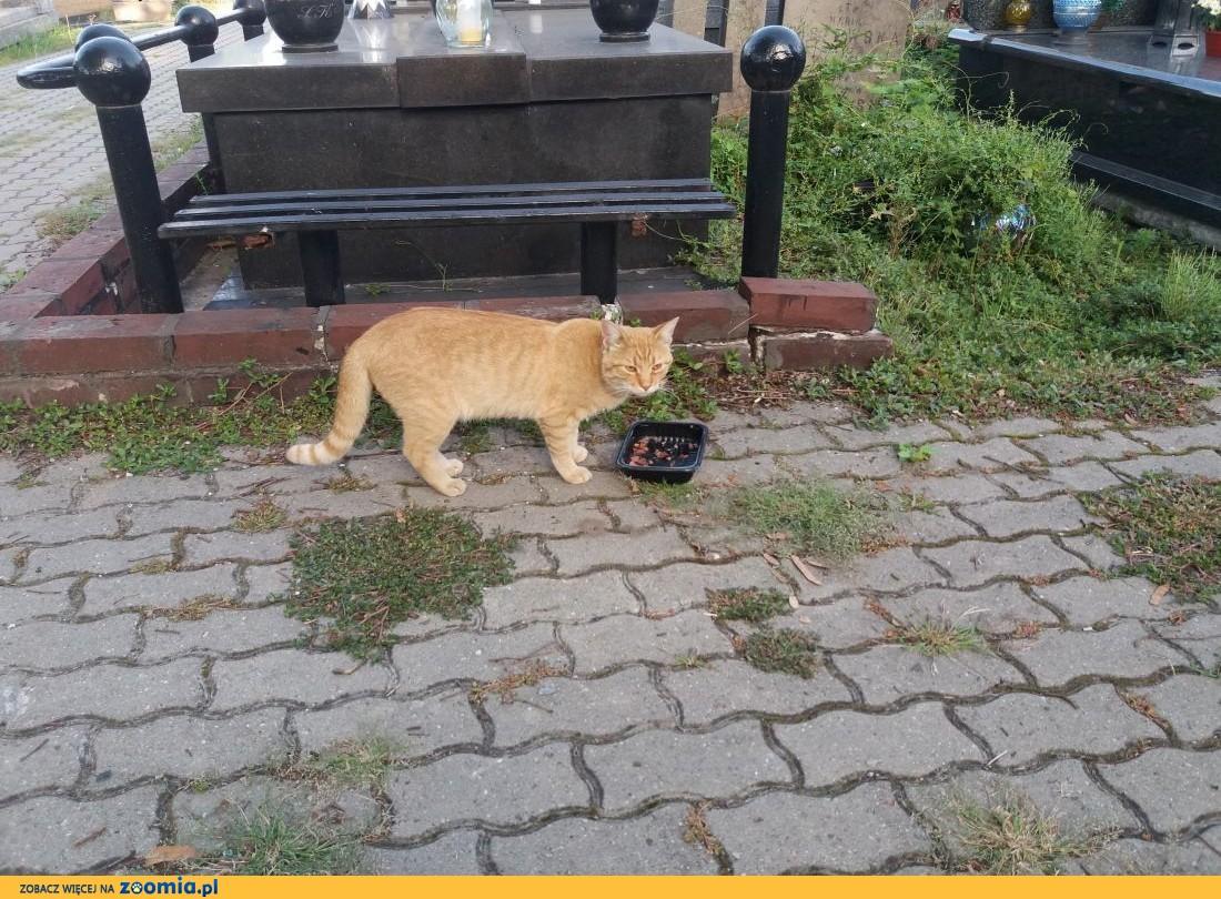 Piękne doroślejsze kociaczki,  mazowieckie Warszawa