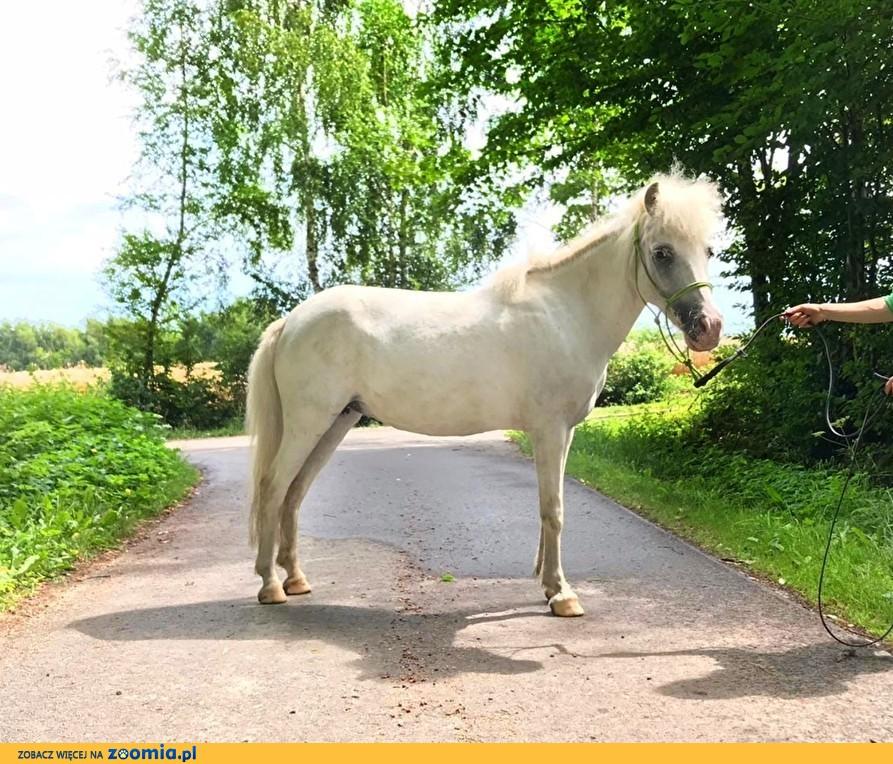 Szukam konia do współdzierżawy/opieki