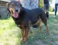 Mega pozytywny, zrównoważony pies Aslan po śmierci właściciela oddany do przytuliska,  małopolskie Kraków