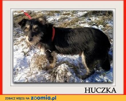 2 lata mała 8 kg terier mix łagodna sterylizowana suczka HUCZKA_Adopcja_