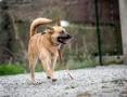 LUNES - dotrzyma Ci kroku! Radosny, mądry pies!,  mazowieckie Warszawa