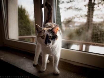 Wspaniała kotka lubiąca dzieci i psy szuka domu gdzie zazna szczęścia