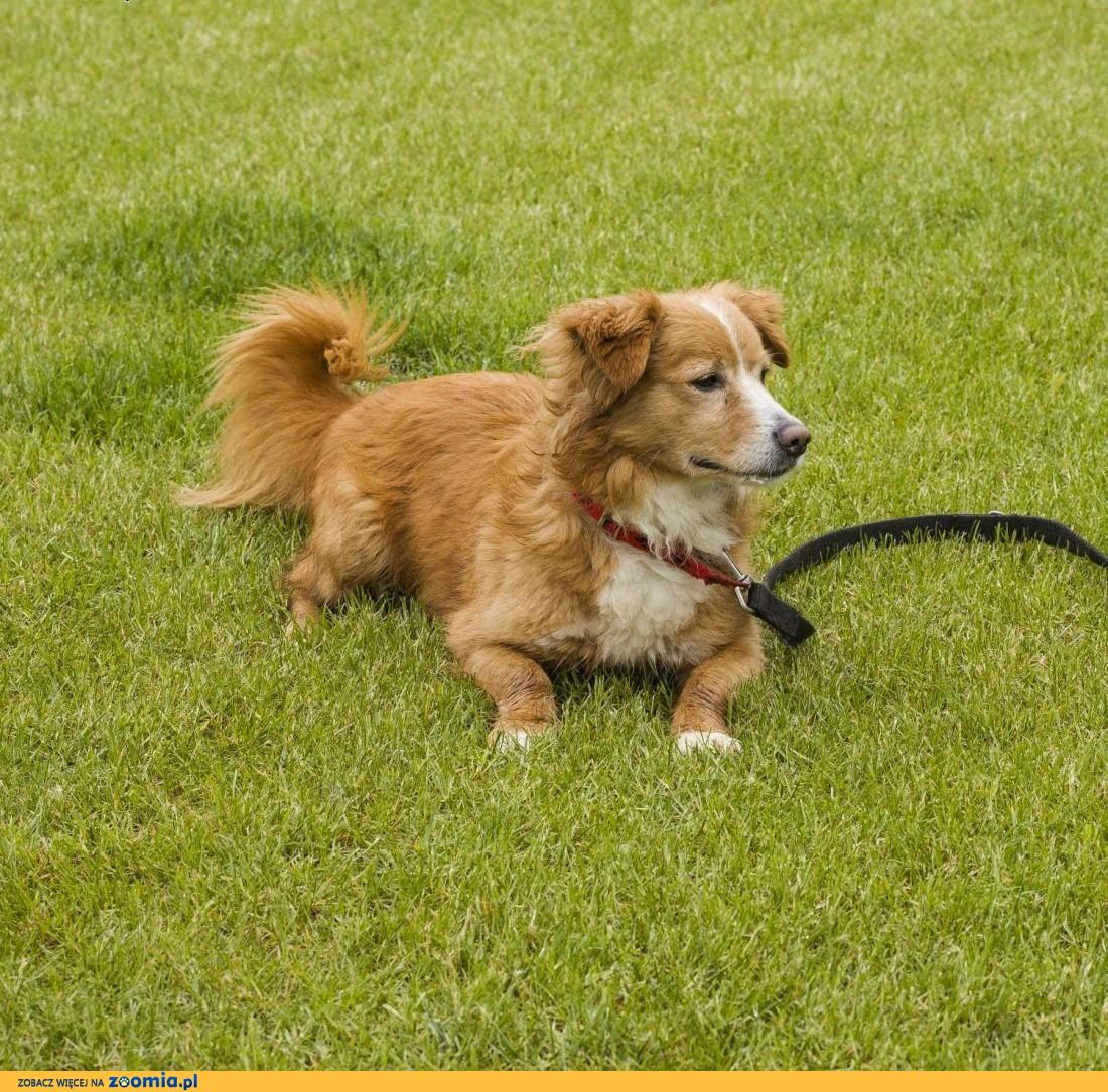 4-letni JOGI cudowny pies czeka na troskliwych opiekunów,  mazowieckie Warszawa