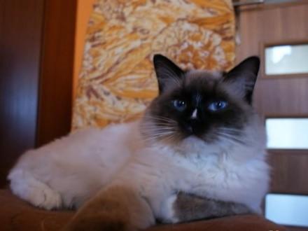 Randki dla miłośników kotów