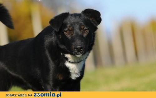 """Willy """"psyjaciel"""" czeka niecierpliwie :),  mazowieckie Warszawa"""