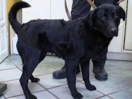 Trewor - bardzo smutny  młody psiak szuka domu