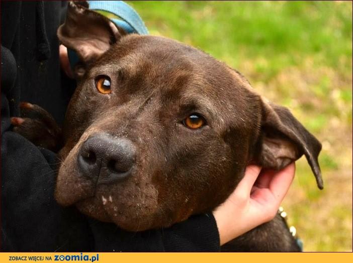 Bodo - młody psiak zakochany w człowieku :)