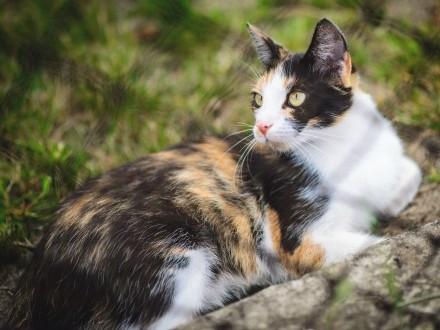 Zaginęła kotka - Słowik przy Zgierzu