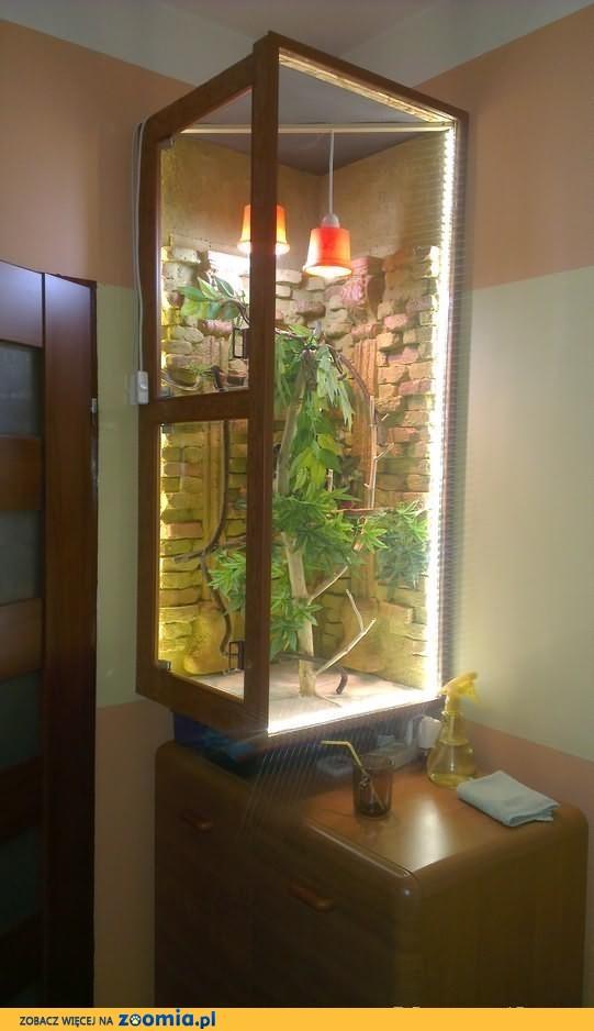 Sprzedam kameleona jemeńskiego z terrarium