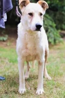 MUNDI - kochany  spokojny psiak szuka domu   mazowieckie Warszawa
