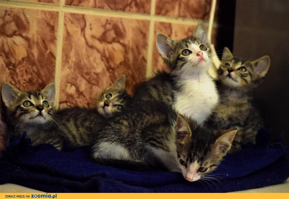 Małe kocięta szukają domów