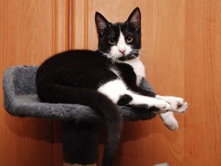 Jenny śliczna 8-mczna koteczka szuka kochającego domu!