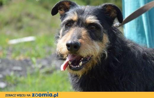 Baks.Wspaniały psi towarzysz.Może czeka właśnie na Ciebie?,  mazowieckie Warszawa