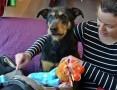 'Baks.Wspaniały psi towarzysz.Może czeka właśnie na Ciebie?,  mazowieckie Warszawa