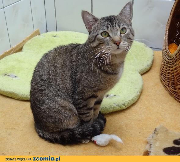 Ogłoszenia Oddam Kota Oddam Kocięta Koty I Kociaki Dachowce