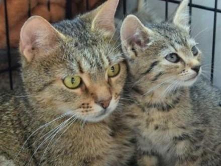 Wyrzucona koteczka z dwoma maluchami   mazowieckie Warszawa