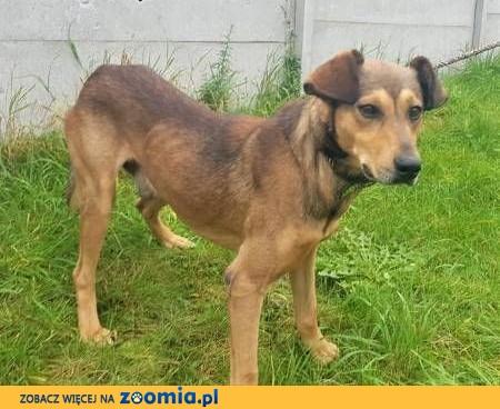 GONIEC - niewielki, młody przerażony schroniskiem psiak szuka domu!,  mazowieckie Warszawa