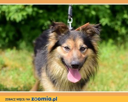 12 kg do domu z ogródkiem  nie do dzieci  czujny pies PEDRO_Adopcja_