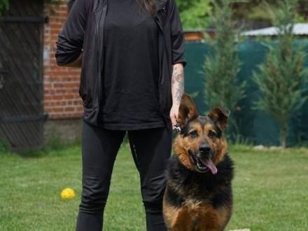 Fred jest silnym psem  Twoje życie z nim będzie snem   mazowieckie Warszawa