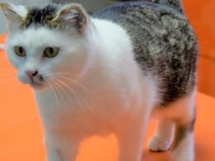 PUSIA- kotka z białaczką szuka domu bez innych kotów
