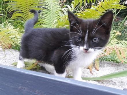 Mała koteczka Juli szuka domu