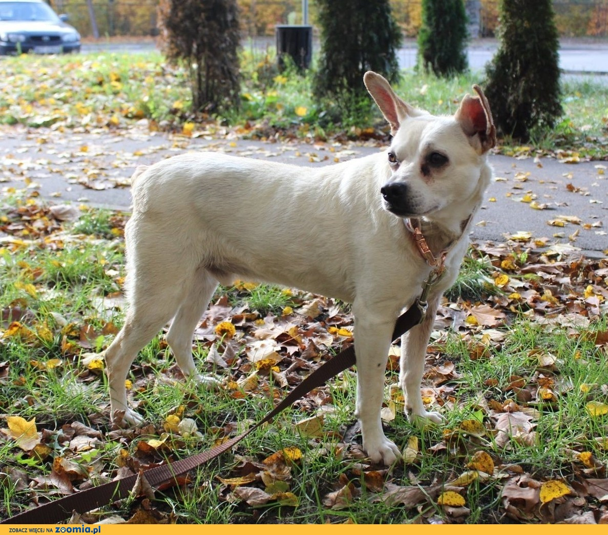 STAŚ - najsłodszy pies świata! adoptuj tego cudaka! :)