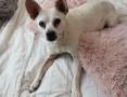 'STAŚ - najsłodszy pies świata! adoptuj tego cudaka! :)
