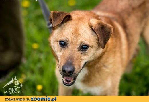 MARIUSZ - super pies i już !!!,  świętokrzyskie Kielce