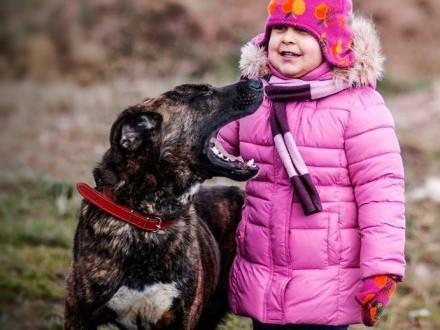 FRODO młodziutki  przepiękny  kochany pies w typie cane corso