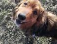 Misiek-wesoły i pogodny psiak szuka domu