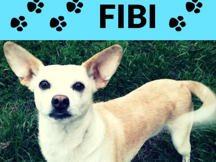 Fibi-przefajna  wesoła 5latka szuka domu