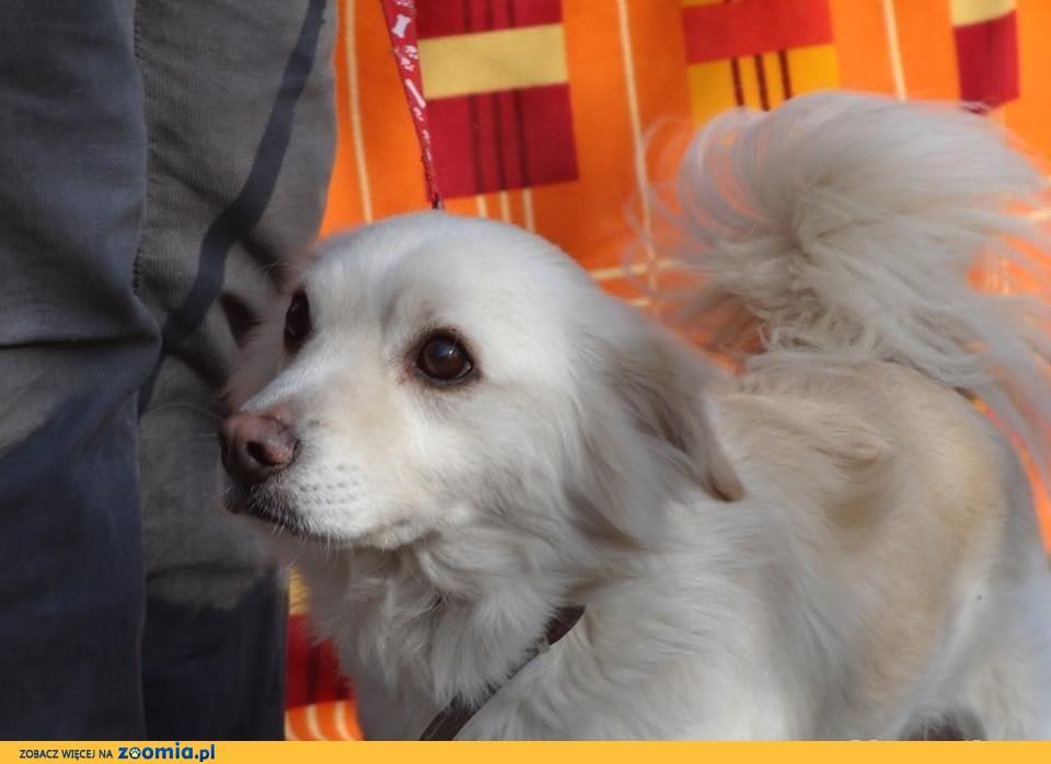 Bobik – niewielki dzielny psiak po przejściach