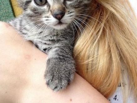 młode kotki  oddam w dobre ręce    mazowieckie Przysucha