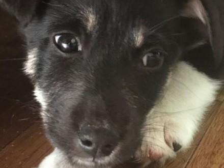 Zen-bezdomny szczeniak czeka na dom !   mazowieckie Warszawa