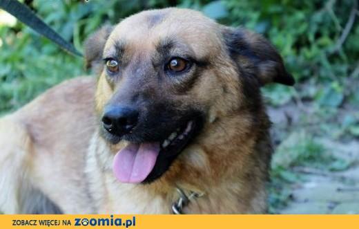 suczka-Mimi,  śląskie Częstochowa