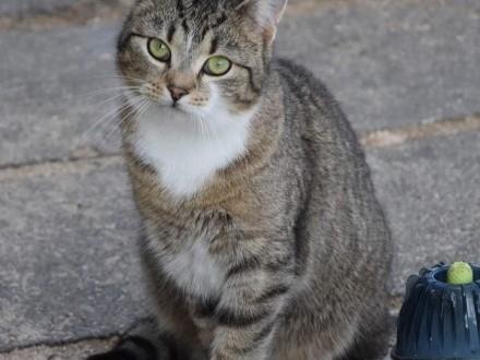 Piękna kotka Asia szuka domu
