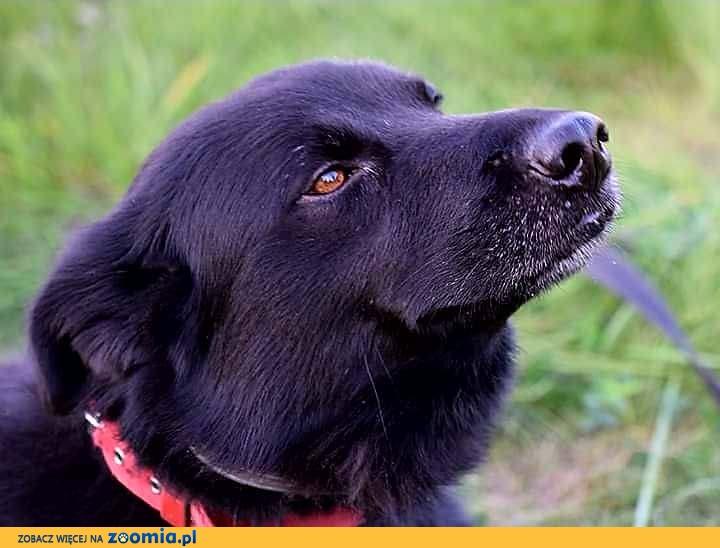 Bąbel, super pies szuka aktywnego domu!