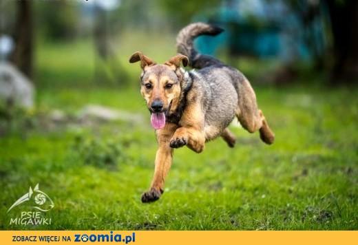 LIMONKA - idealna jako drugi psiak w domu!,  mazowieckie Warszawa