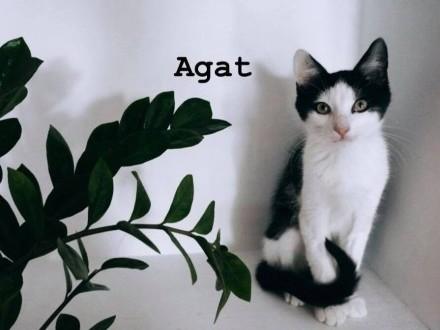 Agat i Rubin
