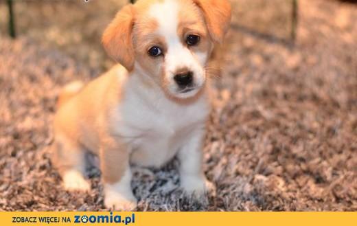 Groovy Ogłoszenia: oddam psa, oddam szczeniaka – Psy i szczeniaki szukają TC01