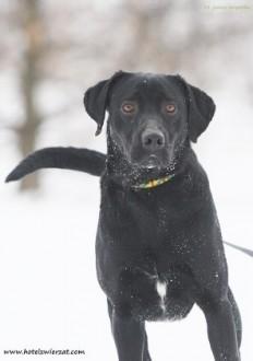 Czarny pies - kocha dzieci, wesoły i przyjacielski, szuka domu