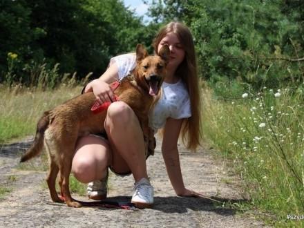 Pikolo-nieduży młody przyjacielski i energiczny psiak   śląskie Chorzów