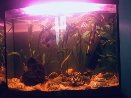 Akwarium 80l/ zaokrąglona przednia szyba