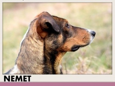 NEMET chart mix młody łagodny wesoły  pies do adopcji   dolnośląskie Wrocław