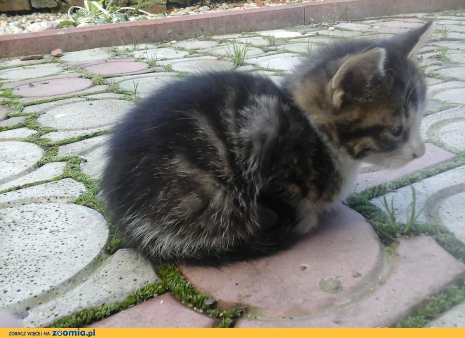 Małe kotki szukają domu
