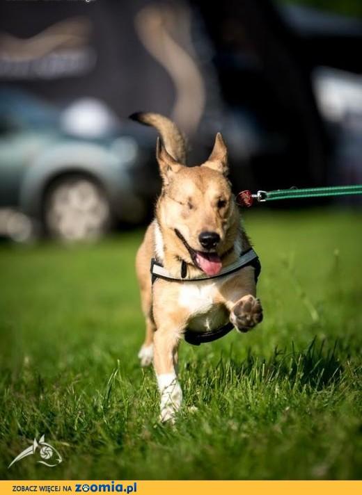 Chcesz psa, co rozkosznie fika? Adoptuj BAŚCIKA!,  śląskie Gliwice