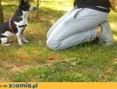 Szkolenie psów,  małopolskie Myślenice